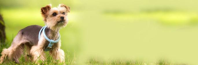 Trockenfutter & Nassfutter für kleine Hunde im alsa Onlineshop.