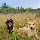 Der Sommer kommt wieder Luna und Peanut freuen sich schon ihr auch? #alsahundewelt #naturgesundfüttern #hundeliebe #dogsofinstagram