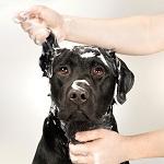 Hundefell ganz einfach waschen.
