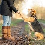 Die Beziehung zwischen Mensch und Hund.