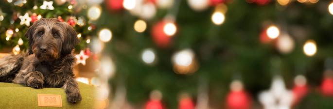 Entdecken Sie die alsa Weihnachtswelt mir vielen besonderen Überraschungen.