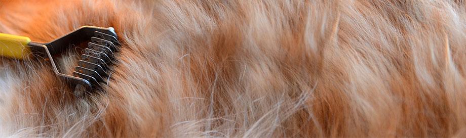 Hunde-Felltrimmer