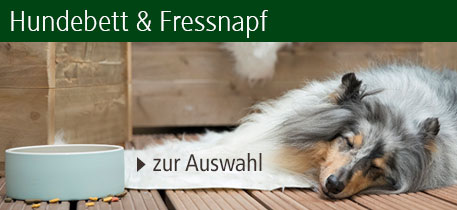 Hundebett & Fressnapf
