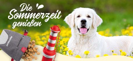Die Sommerzeit mit Hund genießen