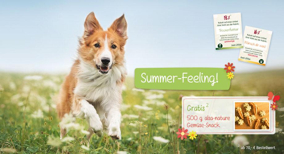 Juni-Mailing - Summer Feeling!