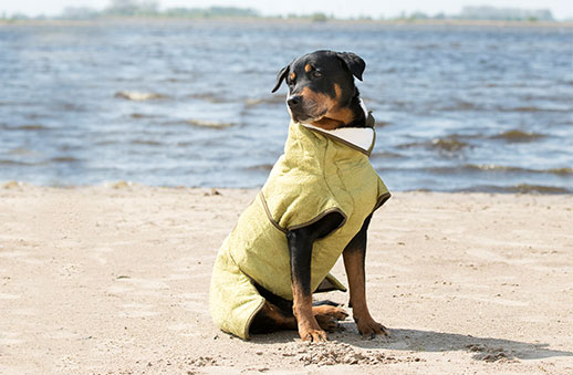 Hundemäntel