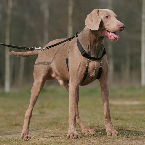 "HUNTER Trainingsgeschirr ""Halter"""