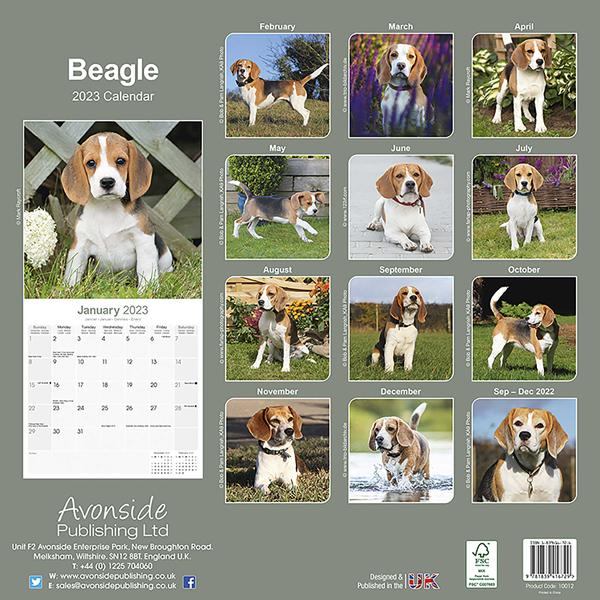 "Kalender 2021 ""Beagle"""