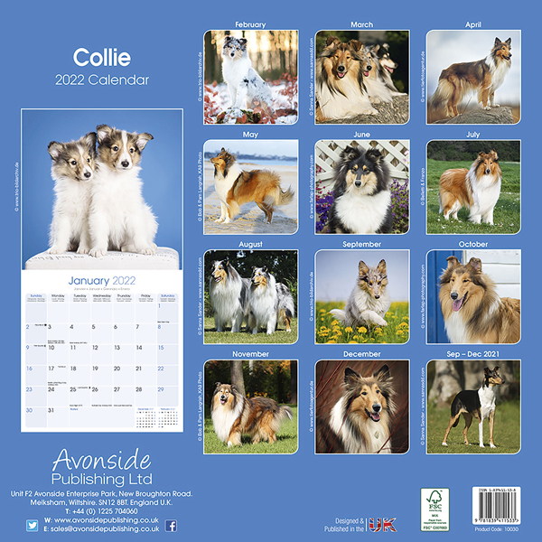 "Kalender 2020 ""Collie"""