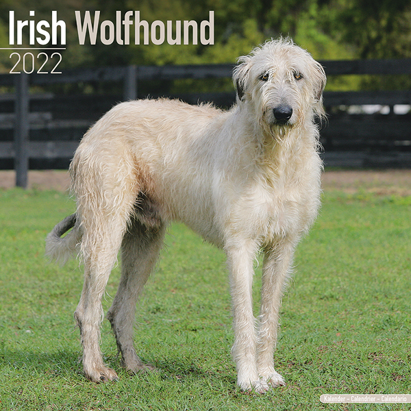 """Kalender 2021 """"Irischer Wolfshund"""""""