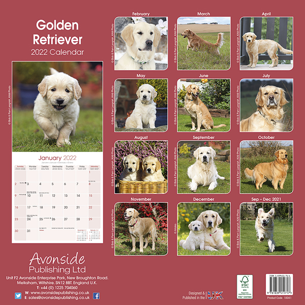 "Kalender 2020 ""Golden Retriever"""