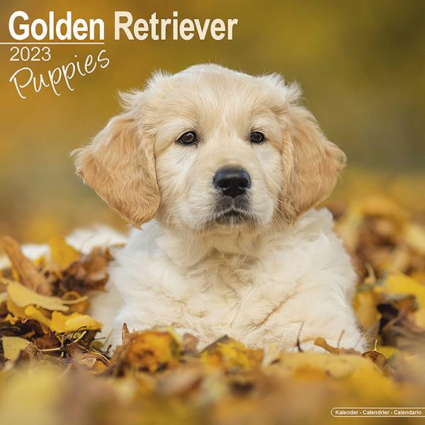 """Kalender 2020 """"Golden Retriever Welpen"""""""