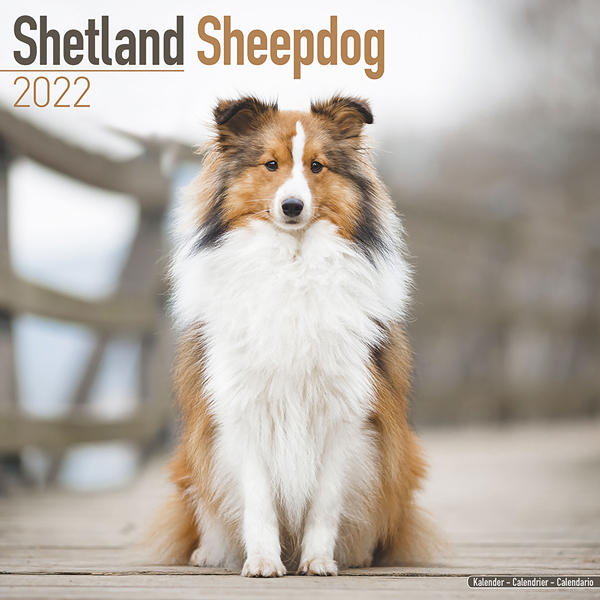 "Kalender 2021 ""Sheltie"""
