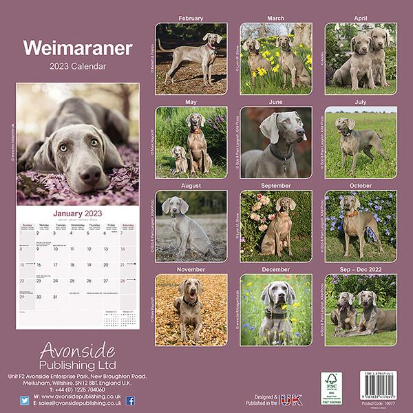 """Kalender 2020 """"Weimaraner"""""""