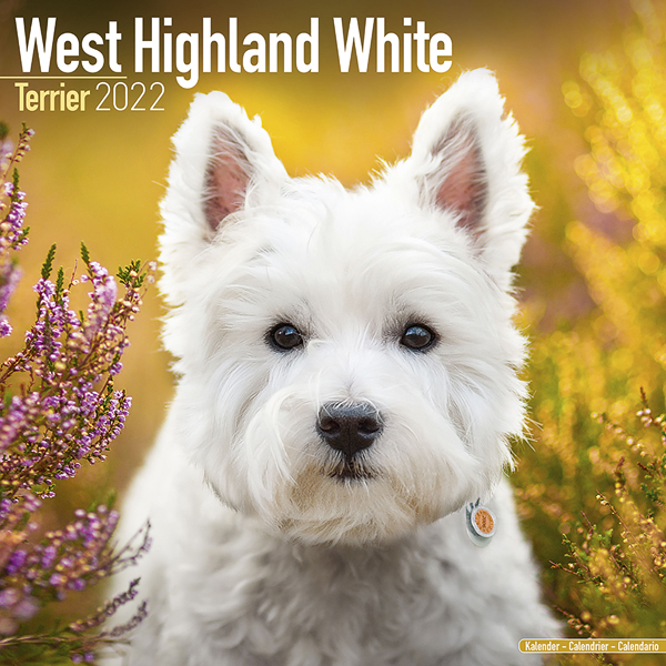 "Kalender 2021 ""Westie"""