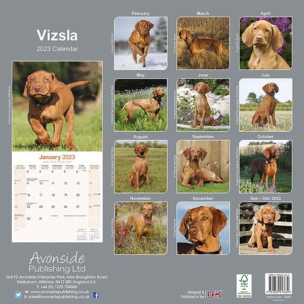 """Kalender 2021 """"Vizsla"""""""