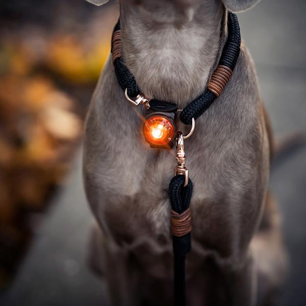"""Orbiloc Leuchtanhänger """"Dog Dual"""""""