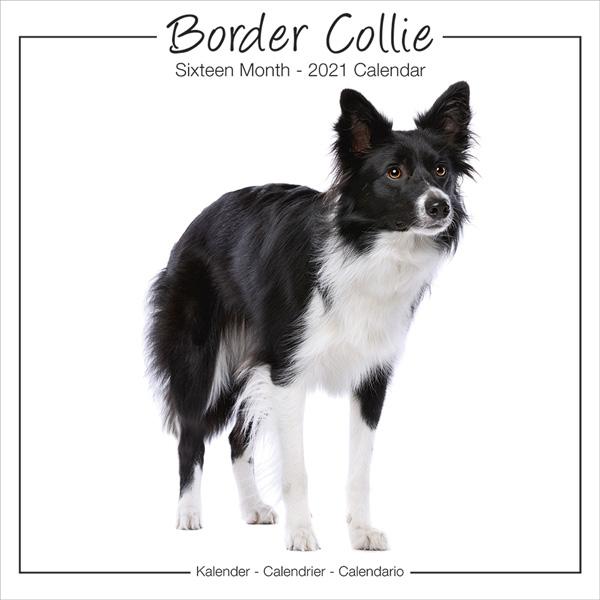 "Studio Kalender 2021 ""Border Collie"""