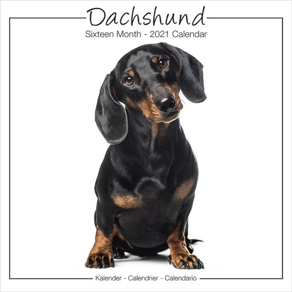 """Studio Kalender 2021 """"Dachshund"""""""