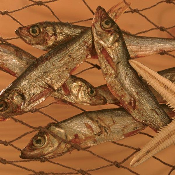 alsa-nature Oostzee haring