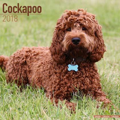 "Kalender 2018 ""Cockerpoo"""