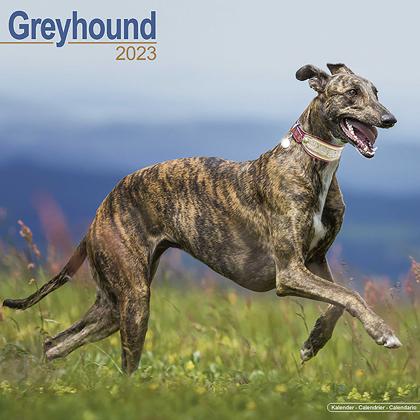 """Kalender 2021 """"Greyhound"""""""