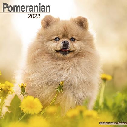 """Kalender 2021 """"Zwergspitz"""""""
