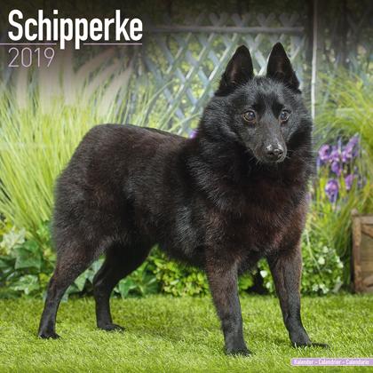 "Kalender 2019 ""Schipperke"""