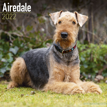 "Kalender 2021 ""Airedale Terrier"""