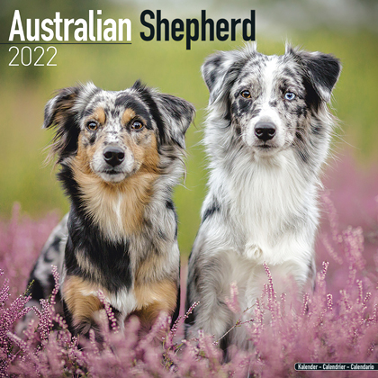 "Kalender 2018 ""Australian Shepherd"""