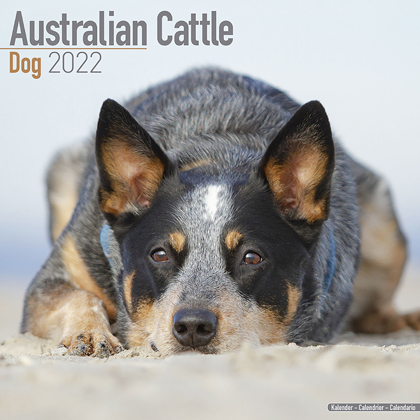 "Kalender 2020 ""Australian Cattle Dog"""