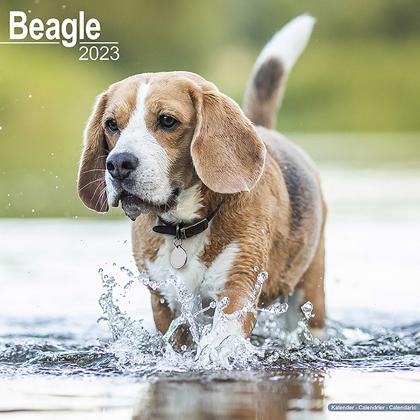 "Kalender 2019 ""Beagle"""