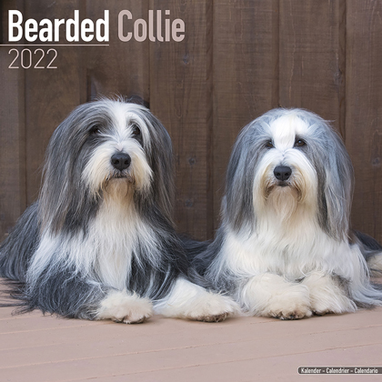 "Kalender 2021 ""Bearded Collie"""