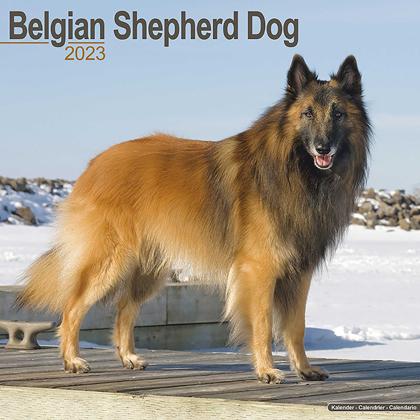 """Kalender 2021 """"Belgischer Schäferhund"""""""