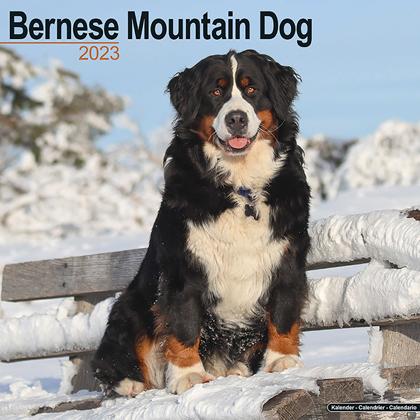"Kalender 2018 ""Berner Sennenhund"""