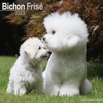 """Kalender 2018 """"Bichon Frise"""""""