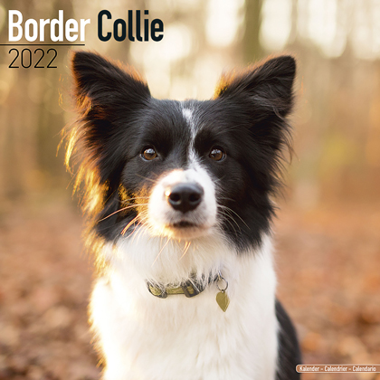 "Kalender 2021 ""Border Collie"""