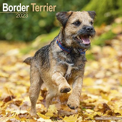 """Kalender 2021 """"Border Terrier"""""""