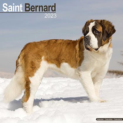 "Kalender 2021 ""Bernhardiner"""