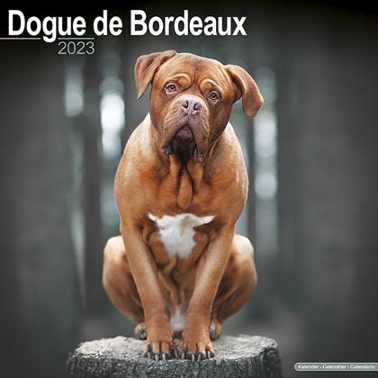 "Kalender 2019 ""Bordeaux Dogge"""