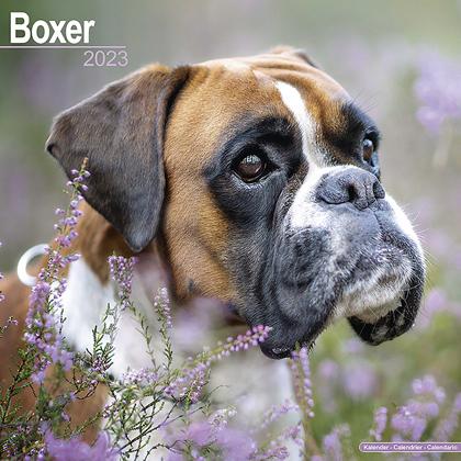"Kalender 2019 ""Boxer"""