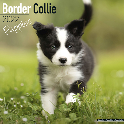 "Kalender 2021 ""Border Collie Welpen"""