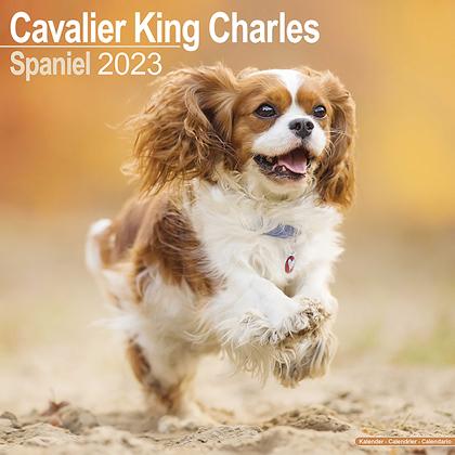 "Kalender 2019 ""Cavalier King Charles"""