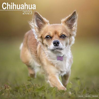 """Kalender 2018 """"Chihuahua"""""""