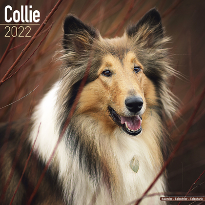 "Kalender 2021 ""Collie"""