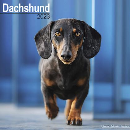 """Kalender 2021 """"Dackel"""""""