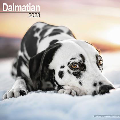 """Kalender 2018 """"Dalmatiner"""""""