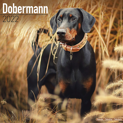 "Kalender 2021 ""Dobermann"""