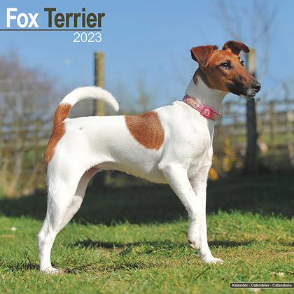 "Kalender 2020 ""Fox Terrier"""