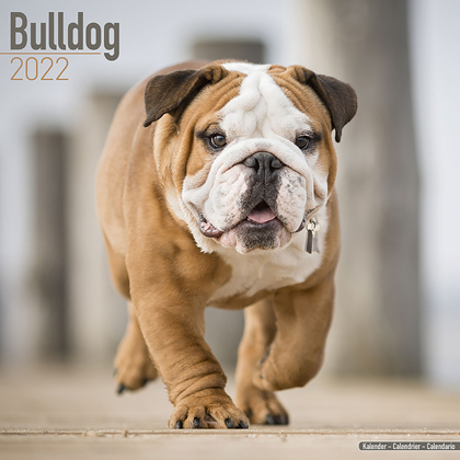 "Kalender 2019 ""Bulldogge"""